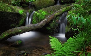Picture summer, nature, river, stones, moss, log, fern, streams