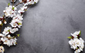 Picture leaves, flowers, spring, twigs