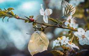 Picture butterfly, branch, spring, flowering