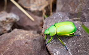 Picture stones, beetle, green