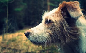 Picture background, each, dog, profile