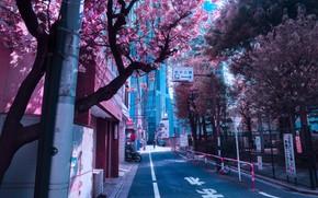 Picture Japan, Japan, flowering in the spring, city street