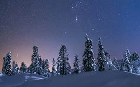 Picture winter, the sky, snow, trees, stars, the snow, starry sky