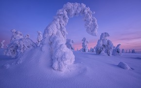 Picture winter, snow, trees, sunset, the snow, Finland, Lapland