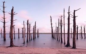 Picture forest, shore, Dead Forest