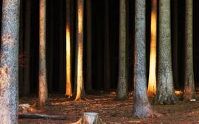 Picture Nature, Trees, Forest, Trunks, Nature, Landscape, Forest, Trees, Woods, Environment, Environment, by Johannes Plenio, Johannes …