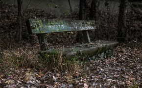 Picture autumn, nature, bench