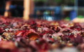 Picture autumn, leaves, foliage, blur, bokeh, autumn leaves