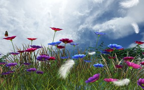 Picture the sky, flowers, spring, feathers