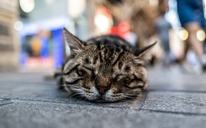 Picture cat, the city, street