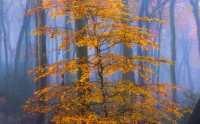 Picture autumn, forest, leaves, fog, yellow, autumn
