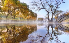 Picture autumn, the sky, trees, nature, fog, lake, reflection, morning