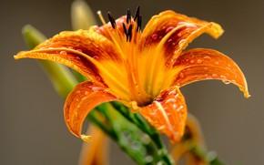 Picture flower, macro, flower