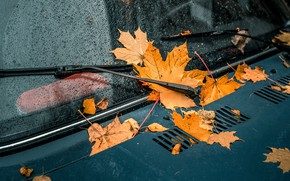 Picture machine, glass, leaves, drops, yellow, the hood, car, falling leaves, wipers, maple, autumn leaves