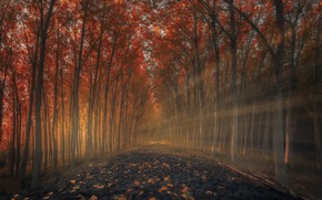 Picture road, light, trees