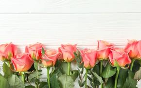 Picture roses, bouquet, orange
