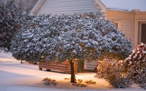 Picture winter, snow, house, Tree