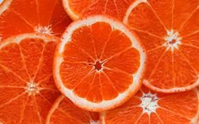 Picture orange, food, ring, slice, citrus