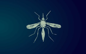 Picture Microsoft, insect, the mosquito, Premonition