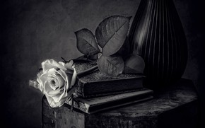 Picture black and white, rose, books