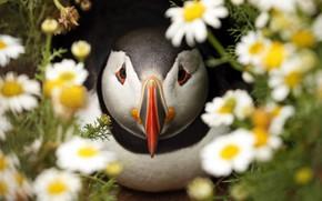 Picture flowers, bird, chamomile, beak, stalled