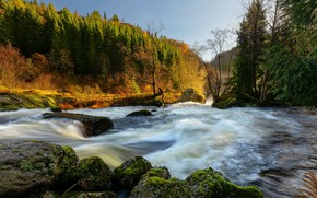 Picture forest, light, river