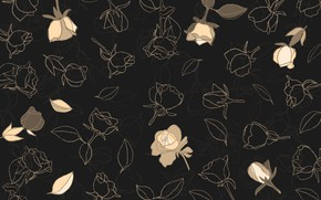 Picture flowers, background, black, roses, buds