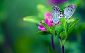Picture photo, butterfly, branch
