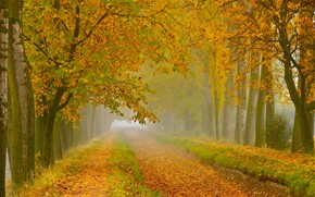Picture road, autumn, forest, leaves, trees, branches, nature, fog, Park, branch, foliage, morning, yellow, track, haze, …