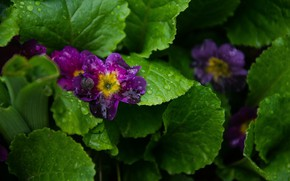 Picture greens, flower, grass, snail, violet