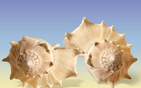 Picture closeups, Seashells, decoracion