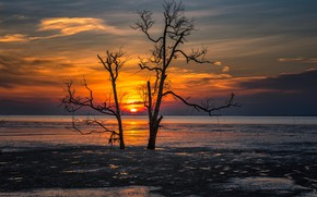 Picture sunset, tree, shore, silhouette, pond