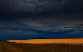Picture road, field, summer, night