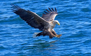 Picture water, hunter, bird of prey