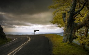Picture road, the sky, tree, turn