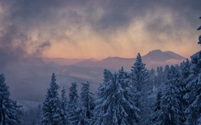 Picture winter, clouds, trees, landscape, mountains, nature, fog, ate, Czech Republic, Beskydy