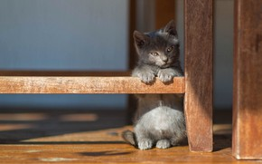 Picture cat, look, light, pose, kitty, grey, background, small, baby, floor, shadows, kitty, stand, furniture legs