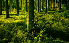 Picture greens, forest, summer, light, trees, bike, pine, booth