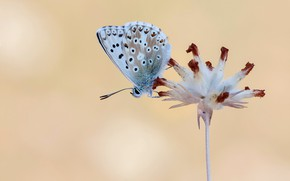 Picture flower, macro, background, butterfly