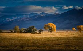 Wallpaper field, clouds, light, trees, landscape, mountains, nature, blue, tree, hills, foliage, tops, haze, yellow, blue, ...