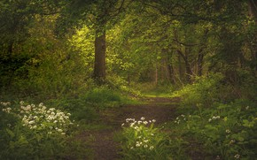 Picture forest, trees, flowers, nature, Russia, path