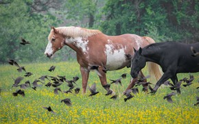 Picture flowers, birds, nature, horses, horse, meadow, pair, a flock of birds, two knights