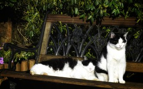 Picture leaves, cats, flowers, bench, stay, cats, two, garden, pair, black and white