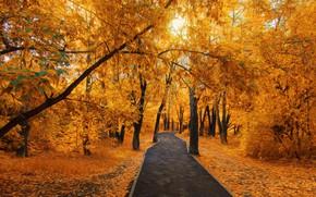 Picture Park, walking, Golden autumn, Temirtau