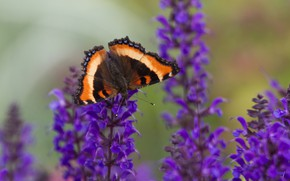 Picture flowers, butterfly, wings