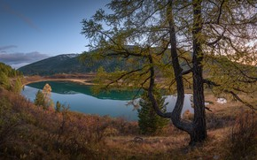 Picture autumn, landscape, mountains, nature, lake, tree, Altay, larch