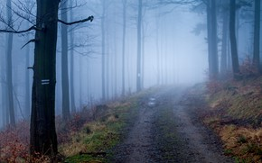 Picture road, autumn, forest, trees, nature, fog