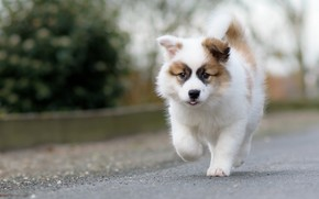 Picture dog, puppy, walk, bokeh