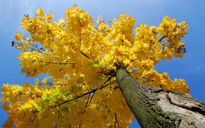 Picture autumn, the sky, leaves, tree, trunk