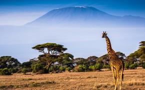 Picture landscape, nature, mountain, giraffe